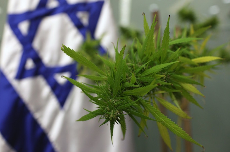 Israel preparing to export medical cannabis