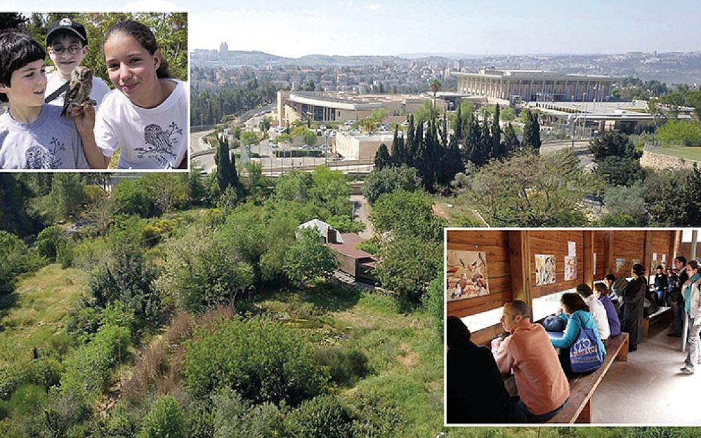The Jerusalem Bird Observatory in central Jerusalem brings people and birds together.