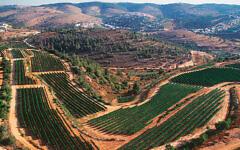 Castel vineyards