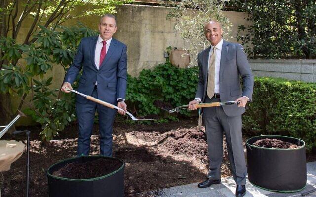 Israeli U.S. Ambassador Gilad Erdan, right, joins his UAE counterpart Yousef Al Otaiba in planting an olive tree at the UAE Embassy in Washington, April 20, 2021. (Courtesy of Israel Embassy)