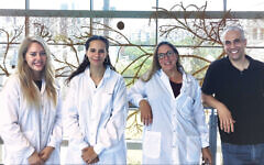 From left, Bar-Ilan master's student Ariel Simon, Eliana Farkas, Ph.D., student Shalhevet Azriel, and Dr. Nissan Yissachar. (Ayelet Pearl)