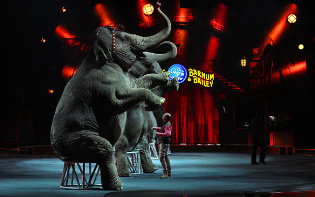 Ryan Henning, an elephant handler, trainer and Deputy Animal Supervisor for Ringling Bros. with the elephants as they performed their last show at the Mohegan Sun Arena in Wilkes-Barre, Pa. The elephant show had it's last show this day and the animals were trucked to Florida as they were retired. -- We followed the Ringling Bros. and Barnum & Bailey circus as they discontinue the elephant act as part of their shows. The Elephants will live in retirement in Florida. Getty Images