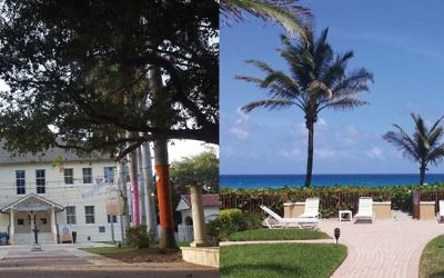 A view of the sea along route AIA in Delray Beach, right. Left, the Cornell Art Museum. TOP CREDIT: Wikimedia LEFT CREDIT: Hilary Danailova/JW