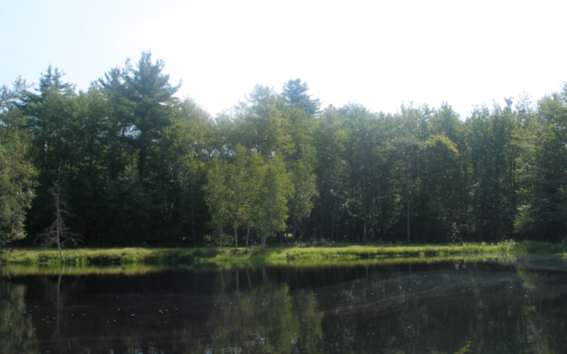 A view of Swan Lake, N.Y., the site of Kasho Camp. (Wikimedia Commons)