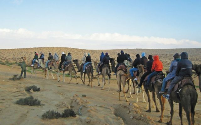 Birthright Israel students on a camel ride in the Negev. Via Flickr