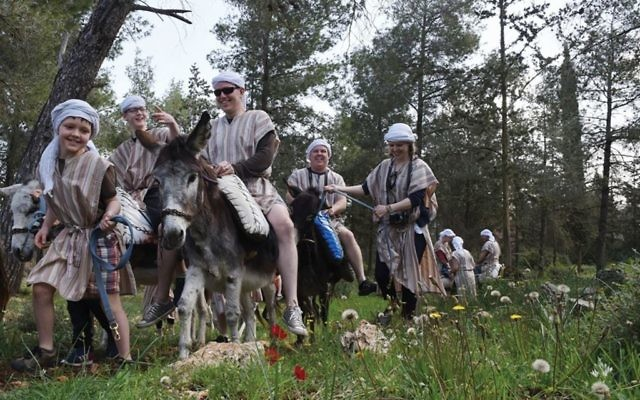 Ancient mode of travel at Kfar Kedem. Photos courtesy of Kfar Kedem