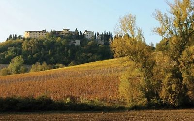 The Sant'Andrea vineyards near the Cantina Gabriele winery. Courtesy of Cantina Gabriele