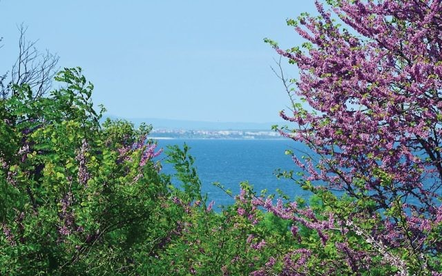 View of the Black Sea in Bulgaria. Photos by Wikimedia Commons