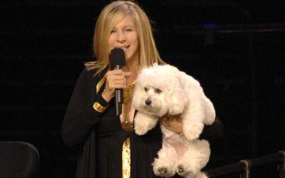 Barbra Streisand and her dog Samantha in 2006. (KMazur/WireImage/Getty Images)