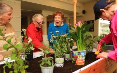 Older adults enjoying a therapeutic horticulture session in an Eldergrow garden.