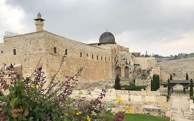 Davidson Archaeological Park in Jerusalem's Old City, April 2018. Amanda Borschel-Dan via Times of Israel