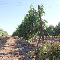 The Barkan Winery in Israel, center of the controversy. Wikimedia Commons