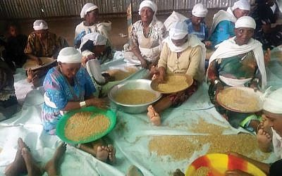 Ethiopian women in Gondar sift wheat in preparation for making matzah. Courtesy of Struggle for Ethiopian Aliyah