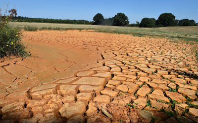 Europe has been hit with a heatwave this summer that has brought unusual 100-degree temperatures. Here is a dried-up tributary of a river in Louplande, in northwestern France. AFP/Getty Images