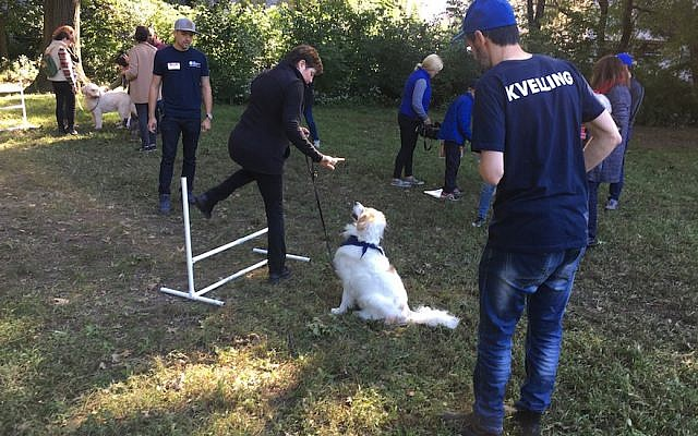 """Ann Toback, executive director of the Workmen's Circle, demonstrates the """"shpring"""" command with her dog, Jesse, at a """"Yiddish for Dogs"""" workshop in New York's Central Park, Sept. 30, 2018. Dog trainer Miguel Rodriguez, left, and Yiddishist Leyzer Burko, right, led the workshop. JTA"""