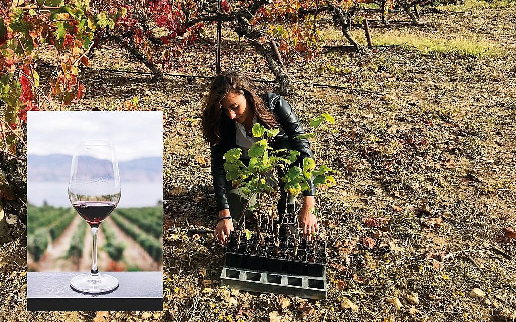 Israel Innovation Fund's Wine on the Vine program.