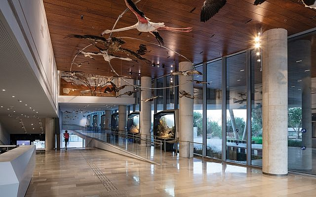 The new Steinhardt Museum of Natural History in Tel Aviv. Steinhardt credit: Amit Geron Packer credit: Sivan Askayo