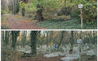 A section of the overgrown Kozma Street Synagogue before Michael Perl's cleanup project got going, top. Above, the restored section.  Photos courtesy of Michael Perl