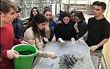 Students at Herzliya Hebrew Gymnasium high school in Tel Aviv producing spirulina. (Courtesy - JustSpirulina.org/via Times of Israel)