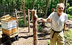 Marty Markowitz, showing off his apiary in the backyard of his Southampton home, said he is back on track after years under the sway of a psychiatrist he says took over his life and business. (Debra Nussbaum Cohen/via JTA)