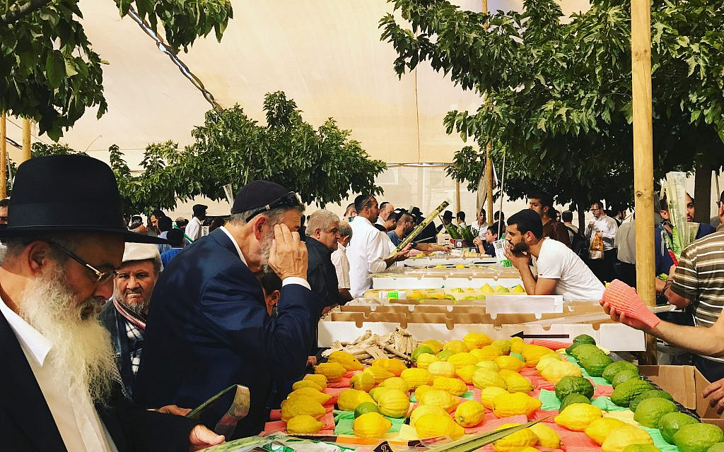 The bustling lulav and etrog market in downtown Jerusalem on the eve of Sukkot. The cost of Lulavs and etrogs are part of the high price of being observant. Miriam Groner/JW