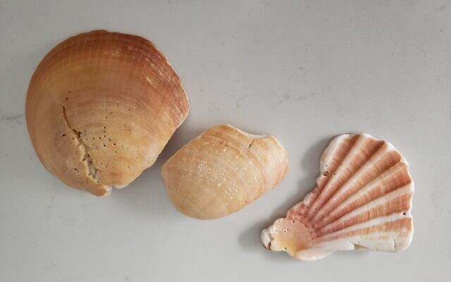 Seashells, whole and cracked. Courtesy of Nina Mogilnik
