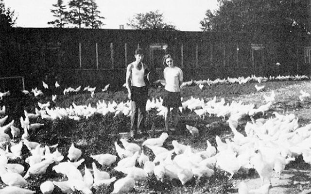 Jewish farmers on a family chicken farm in Millstone Township.