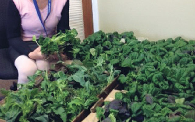 Kathleen McMahon, Care Transitions nurse at Jewish Family Service of Central NJ, with some of the fresh produce made available to patients in its program.