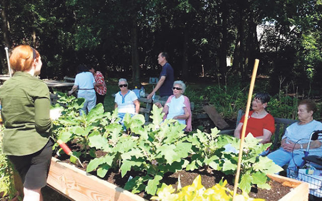 "Grotta Fund for Senior Care is looking to fund more programs like ""Grow Together""; created through a partnership between Jewish Family Service of Central NJ and Groundwork Elizabeth, it uses volunteers of all ages, including seniors, to work o"