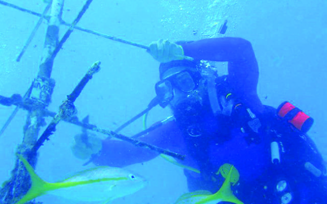 Scubi Jew president Josh Keller helps to grow endangered coral species in an offshore nursery in Key Largo. Photos courtesy of Scubi Jew