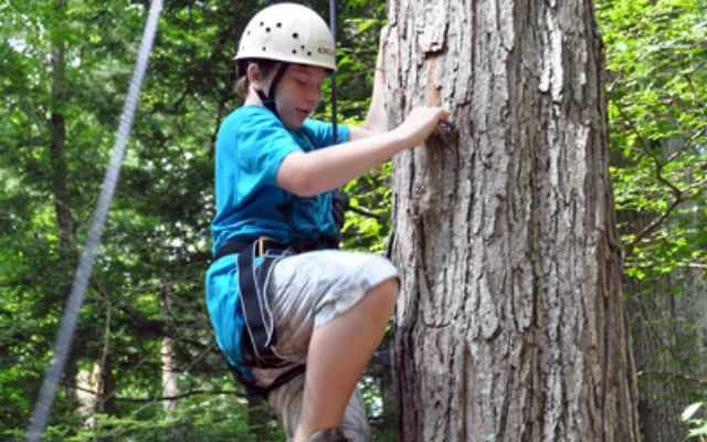 Adam Pollack of Montclair gets some experience climbing a tree at Camp JRF last summer.