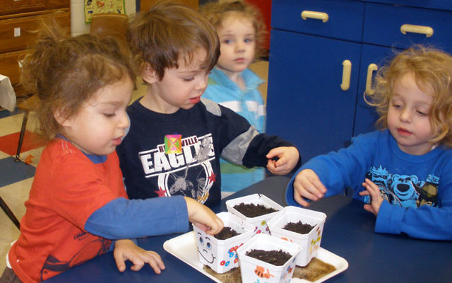RPRY preschoolers, from left, Shamai Reinitz, Jacob Katz and Dovid Weisel put seeds in decorated containers to give to seniors as part of the day of good deeds and kindness in honor of the Rev. Dr. Martin Luther King. Photo by Debra Rubin