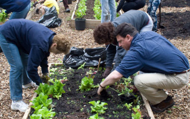 Planting in Gan Tikvah Photo by Paul Robinson