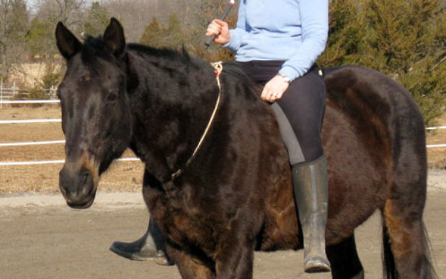 Cantor Shira Nafshi of Temple B'nai Or in Morristown, an accomplished horsewoman, will participate in a cantorial concert Feb. 13 to benefit the temporary animal shelter Seer Farms.