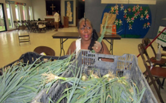 An organizer at a community-supported agriculture project run by New Roots, a Jewish food project in Louisville, Ky., gathers scallions for patrons to later pick up. (Courtesy New Roots)