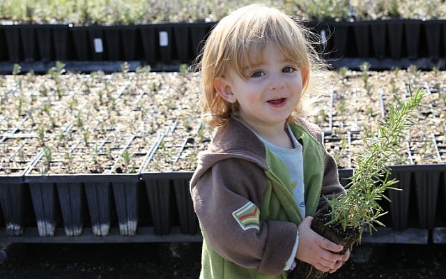 An Israeli toddler chooses seedlings to plant ahead of the Jewish nature holiday Tu biShvat. (photo credit: Nati Shohat/Flash90)