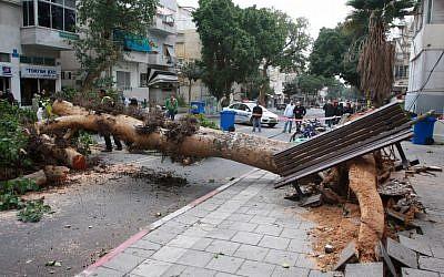 A fallen tree on King George street in Tel Aviv (photo credit: Roni Schutzer/Flash90)