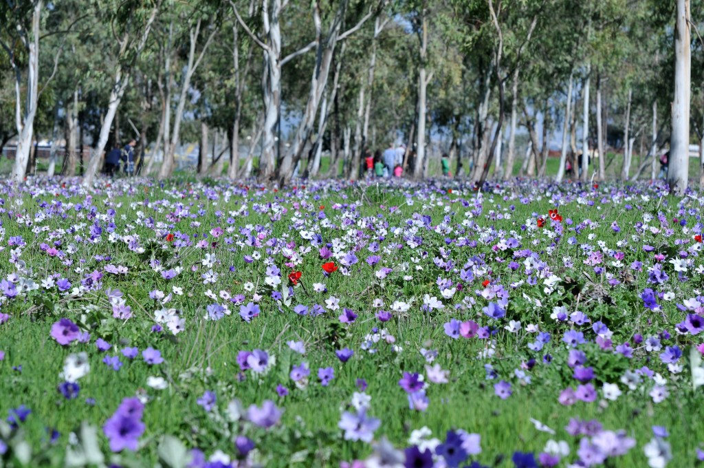 Take A Walk On The Wild Flowers Side The Times Of Israel