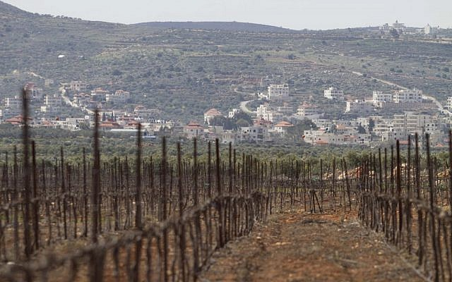 An illustrative photo of a vineyard in a West Bank settlement near Nablus (photo credit: AP Photo/Dan Balilty)