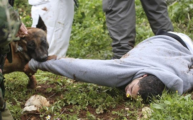 An Israeli police dog attacks a demonstrator during a protest in the village of Kufr Qaddum near the Israeli settlement of Kdumim in the northern West Bank, Friday. (photo credit: AP)