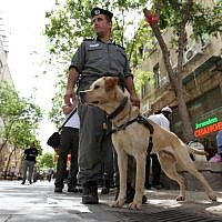 Illustrative photo of a police dog on patrol (Nati Shohat/Flash90)