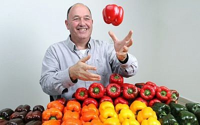 Dr. Yonatan Elkind of Hebrew University's Robert H. Smith Faculty of Agriculture, Food and Environment, posing with some of the hybrid peppers he developed with his research team. (photo credit: Nati Shohat/Flash90)