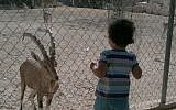A child enjoys a visit to the Beersheba zoo (photo credit: CC-BY Eddau/Wikipedia)