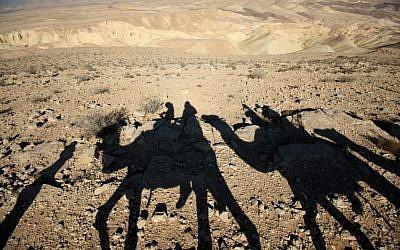 Tourists on a camel ride through the desert  (photo credit: Keren Freeman/Flash90)