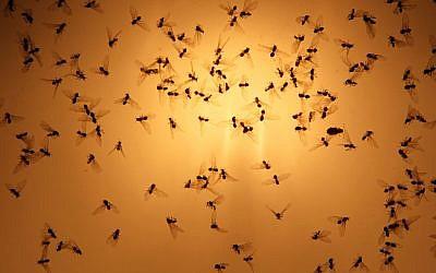 Flies seen at sunset. (Nati Shohat/Flash90)
