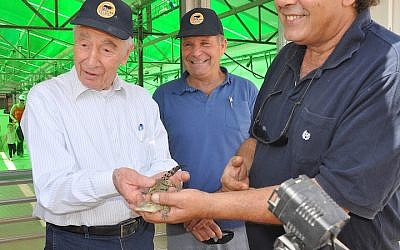 Israeli President Shimon Peres at a petting zoo in the Arava (photo credit: Tami Levana/GPO/Flash90)