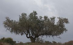 Nachal Tzipori. (photo credit: Yossi Zamir/Flash90)
