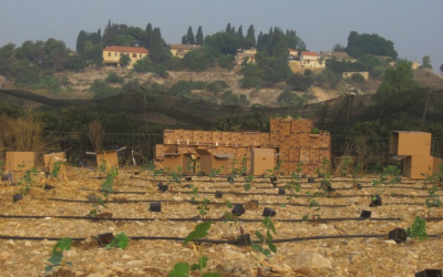 A view of a Bat Shlomo vineyard and the village homes (Courtesy Bat Shlomo Winery)