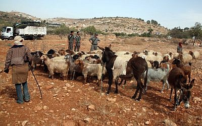 Soldiers watching sheep in the West Bank. (illustrative photo: Najeh Hashlamoun/Flash90)