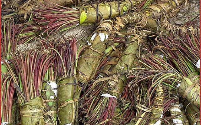 Bundles of khat (photo credit: SS BY-SA 3.0, by Abalg, Wikimedia Commons)